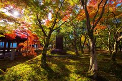 Tofuku-ji temple garden with Autumn leaf, Kyoto Stock Image