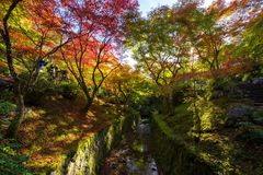 Tofuku-ji temple garden at Fall, Kyoto Royalty Free Stock Images
