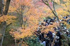 Tofukuji Temple : KYOTO - 25 Nov 2017: Crowds gather at Tofukuj royalty free stock photos