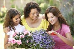 Tog de jardinagem da família de 3 gerações Fotografia de Stock