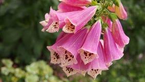 Blomman efter regnar Arkivfoto