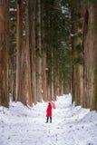 Togakushi-Schrein, ein M?dchen, das einen roten Regenschirm im Kiefernwald des Tempels h?lt Der Weg zu Togakushi-Schrein Okusha N stockfotos