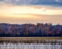 Togatec aux canards de Migratig de crépuscule à l'arrière-plan photo libre de droits