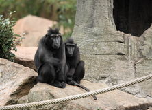 Together. A photo of a monkey royalty free stock photo