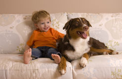 Together. Blond Caucasian toddler posing on a couch looking at his brown Australian Shepherd puppy. Dog in focus, both model released Royalty Free Stock Photo