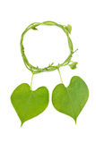 Together heart. Couple heart shape by green leaf Royalty Free Stock Photos