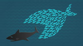 Together we stand: Big Little Fish eats Big Fish. United we stand, divided we fall, school of little fishes chase big fish Royalty Free Stock Images