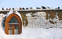Together is warmer. Pigeons near the snow-covered window Royalty Free Stock Photography