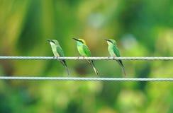 togetherness Immagini Stock Libere da Diritti