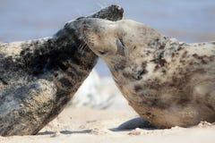 togetherness Djurt kamratskap, förälskelse och sinnesrörelse Tillgiven lös skyddsremsahälsning royaltyfria foton