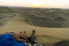 Togheter do deserto Imagens de Stock Royalty Free