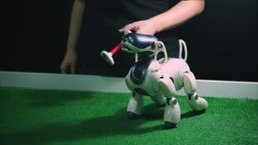TOGLIATTI RYSSLAND - JULI 21, 2017: Elektronisk robothund som tar leksakbenet i dess mun stock video