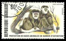 Colobus. Togo - stamp printed in1977, Fauna, Series Endangered animals, Black-and-white Colobus Royalty Free Stock Photography