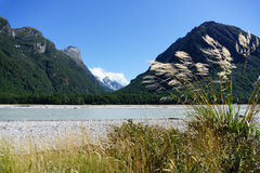 Toi toi in breeze with Southern Alps landscape across the silt laden edge of Dart River Stock Images