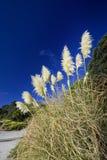 Toiinstallatie van Toi, Strand, Nieuw Zeeland. Royalty-vrije Stock Fotografie