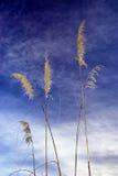 Toiinstallatie van Toi tegen blauwe hemel Stock Afbeeldingen