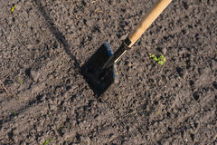 Toil work of ground. spade insert soil Stock Photo