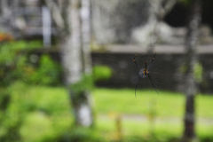 Toile d'araignée à Bangkok Photos libres de droits