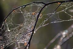 Toile d'araignée Photo stock