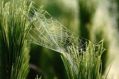 Toile d'araignée Image stock