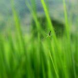 Toile d'araignée Photographie stock libre de droits
