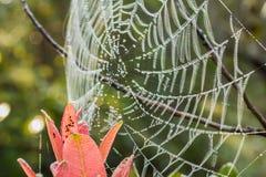 Toile d'araignée Images libres de droits