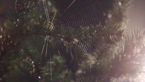 Toile d'araignée clips vidéos