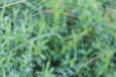Toile d'araignée d'araignées avec la petite goutte de l'eau, rosée de matin images stock
