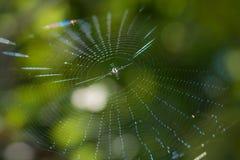 Toile d'araignée au soleil sur un fond brouillé Photographie stock libre de droits