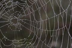 Toile d'araignée avec des baisses Image libre de droits