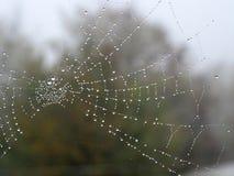 Toile d'araignée avec des baisses de l'eau comme des perles images stock