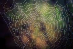 Toile d'araignée avec des baisses de l'eau image libre de droits