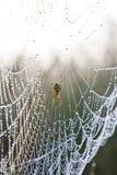 Toile d'araignée avec des baisses de l'eau sous la lumière du soleil Photos stock