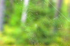 Toile d'araignée avec des baisses de rosée Photos libres de droits