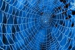 Toile d'araignée avec des baisses de rosée Photo stock