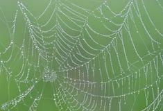 Toile d'araignée avec des baisses de rosée Image stock