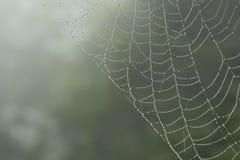 Toile d'araignée avec des baisses pluvieuses images stock