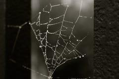 Toile d'araignée avec des gouttelettes sur la cage Photographie stock
