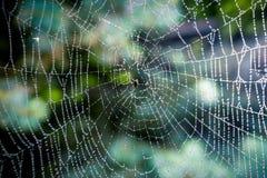 Toile d'araignée avec des gouttes de l'eau à la forêt Images libres de droits