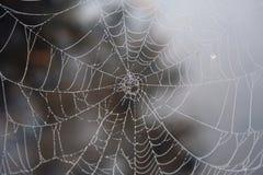Toile d'araignée avec la rosée image libre de droits