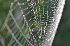 Toile d'araignée avec la rosée Photographie stock libre de droits