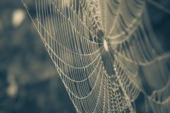 Toile d'araignée avec la rosée de matin Image libre de droits