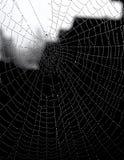 Toile d'araignée avec la rosée de matin Photos stock