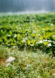 Toile d'araignée avec la rosée photos stock