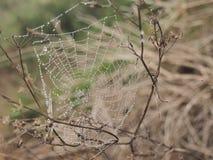 Toile d'araignée avec la rosée images libres de droits