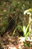 Toile d'araignée avec un fond vert, série de nature Photographie stock