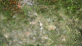 Toile d'araignée blanche banque de vidéos