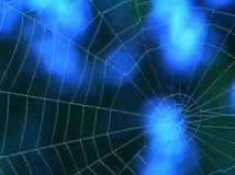 Toile d'araignée bleue Images libres de droits