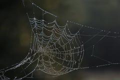 Toile d'araignée chargée par rosée Photo libre de droits