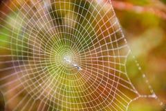 Toile d'araignée circulaire - blanc sur un fond coloré image libre de droits
